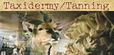Taxidermy Tanning