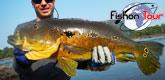 fishon-tour 165x80-Bresil