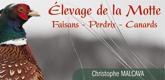 Elevage-de-la-motte-165-x-80