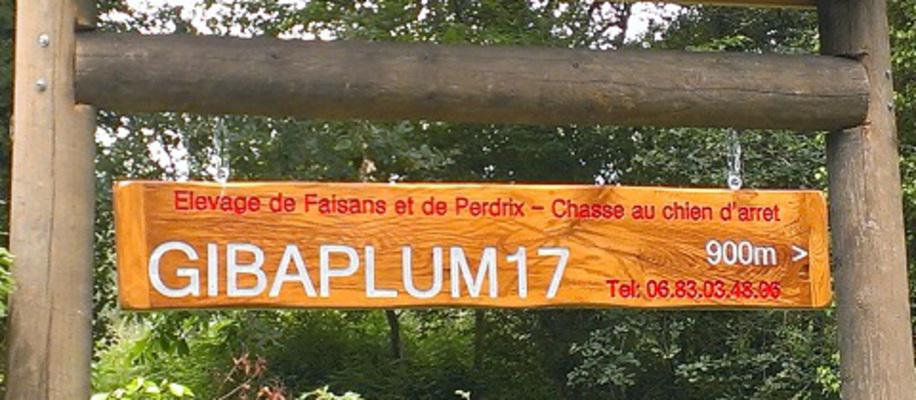 Gibaplum17