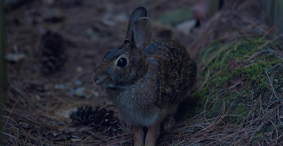 L'EARL DE L'ETANG (49) reste ouvert toute l'année pour la chasse