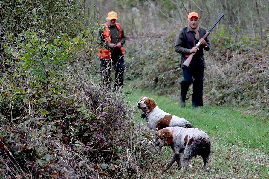 Une des plus belles chasses de la région – CHASSE DE LA GRANDE COURBE (72)