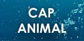 – CAP ANIMAL –